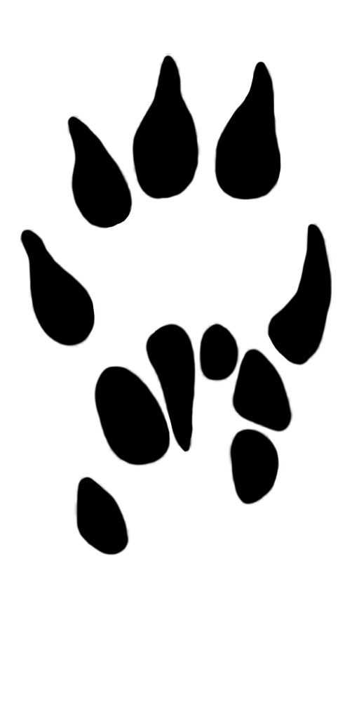 paw prints clipart mole paw 13 mm
