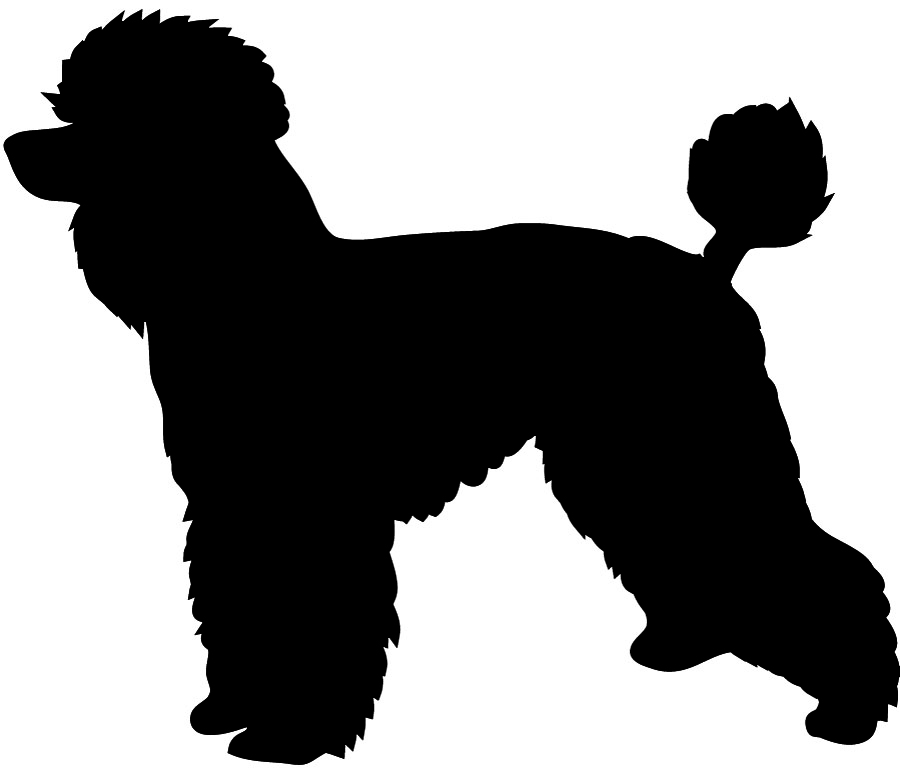 silhouette of poodle