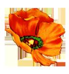 digital scrapbooking flowers poppy head