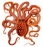 clipartqueen's octopus picture