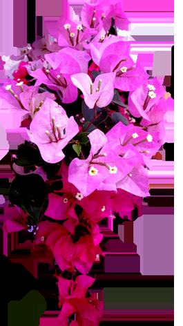 purple thai flower