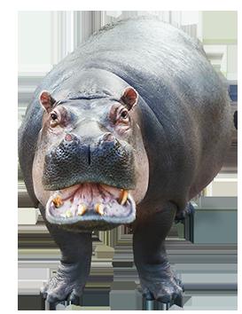 hippo clip art open mouth