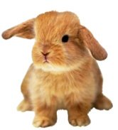small evil Easter Bunny clipart