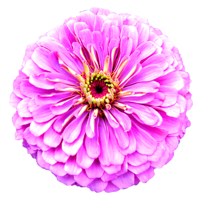 light purple flower clipart