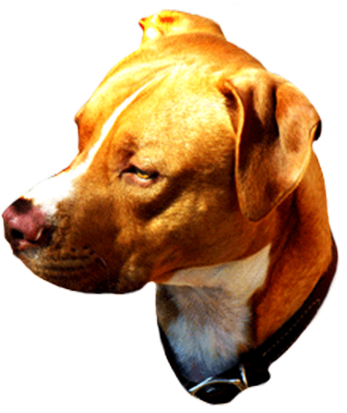 head of brown dog