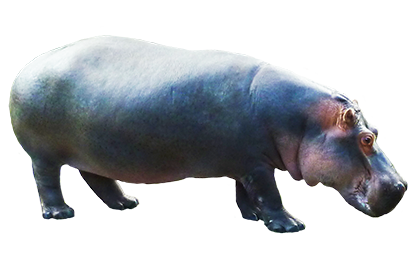 Side view of big hippopotamus