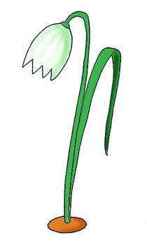 spring clipart snowdrop