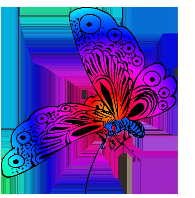 beautiful butterfly image