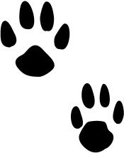 paw print of los front and hind leg