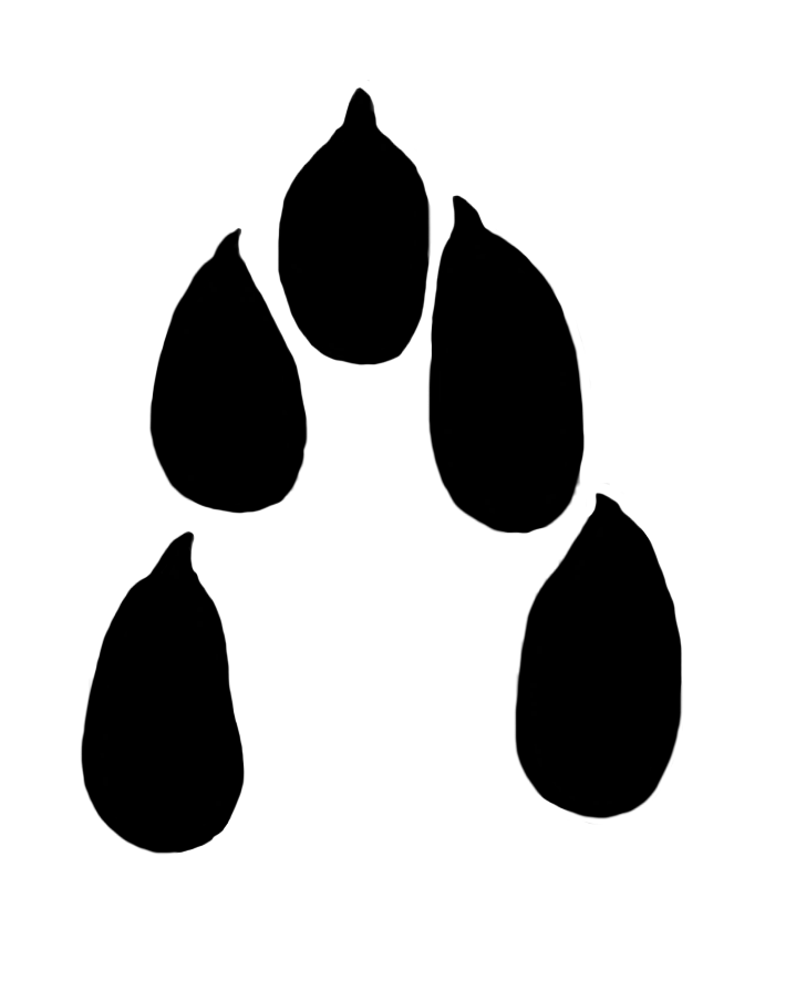 hare paw print clipart 30 mm