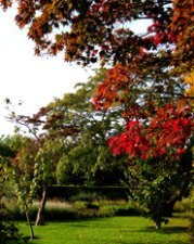 fall clipart landscape red leaves