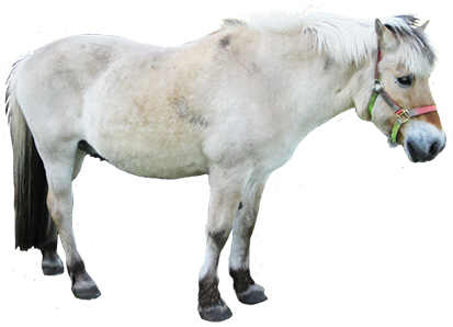 clipart of small white horse