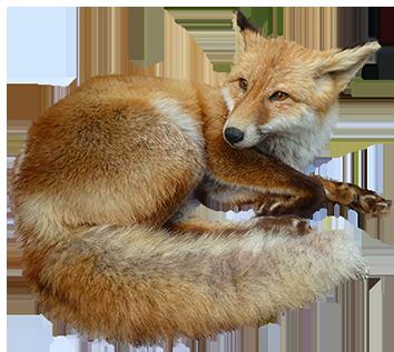 animal-clip-art-fox