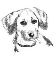 pencil sketch of dogs head