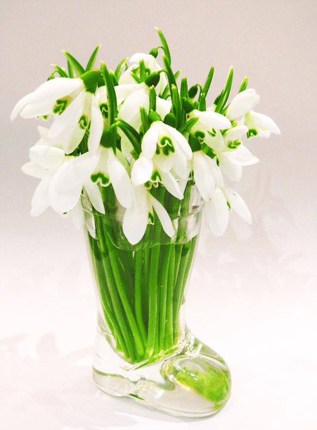 snow drops in vase