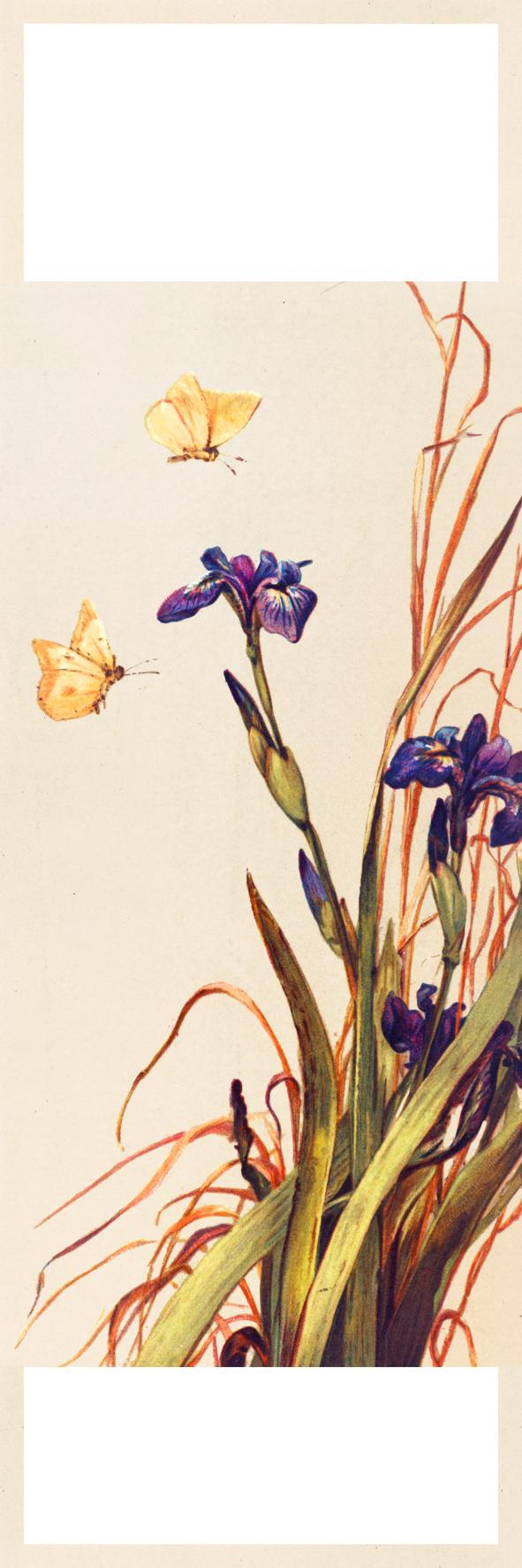 bookmark print butterflies iris