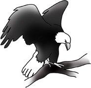 bald eagle clip art