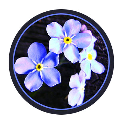 blue spring flowers in circle