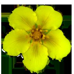 clip art yellow flower