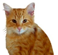 cat clip art ginger