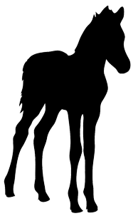 silhouette of foal