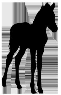 silhouette of foal