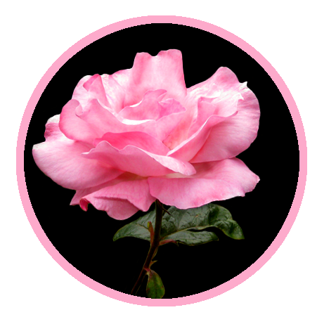 rose clipart example black background