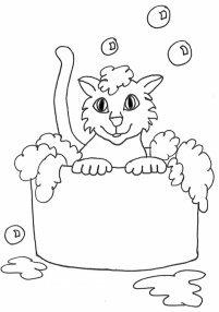 kitten in bathtub