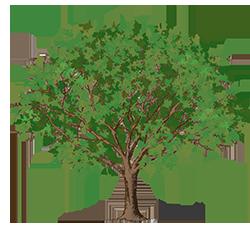 tree clipart small