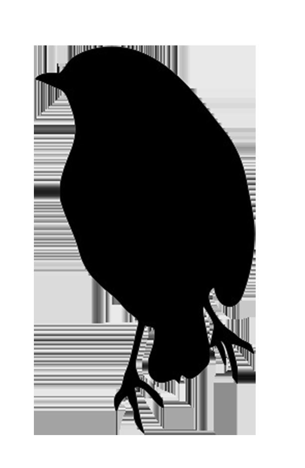 silhouette of robin