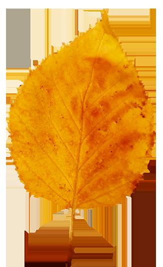yellow fall leaf clip art
