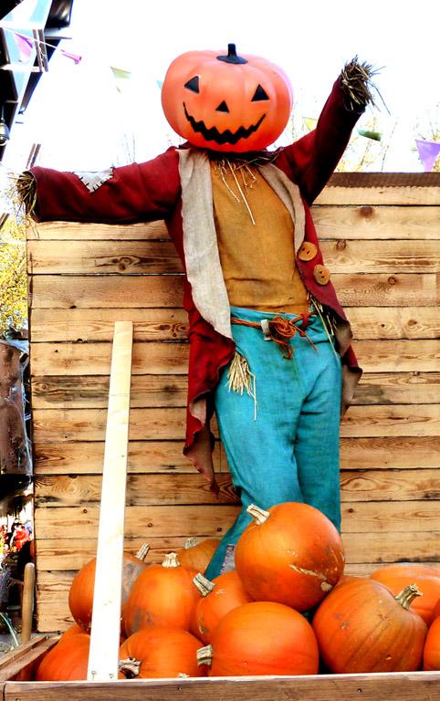 Halloween pumpkin man with pumpkins