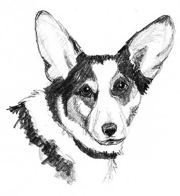 clipartqueen dog sketch