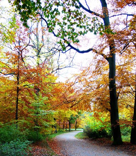 footpath in fall park