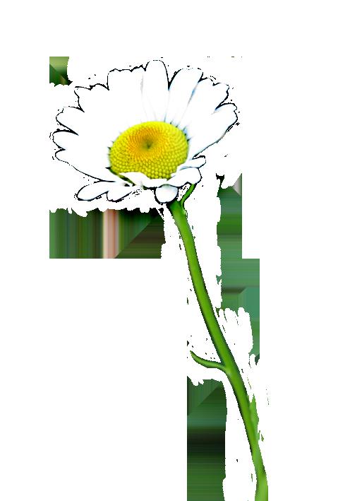 daisies clip art