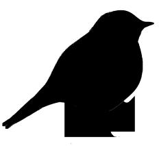 small black silhouette of bird