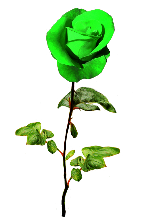 St. Patrick's day green rose