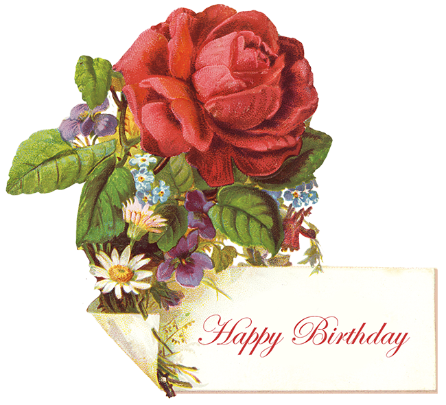 vintage birthday greeting with red rose