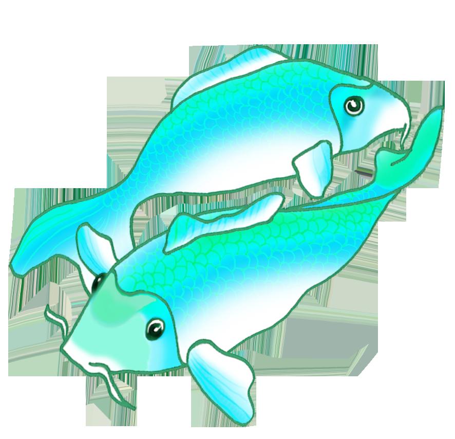 two blue green koi fish