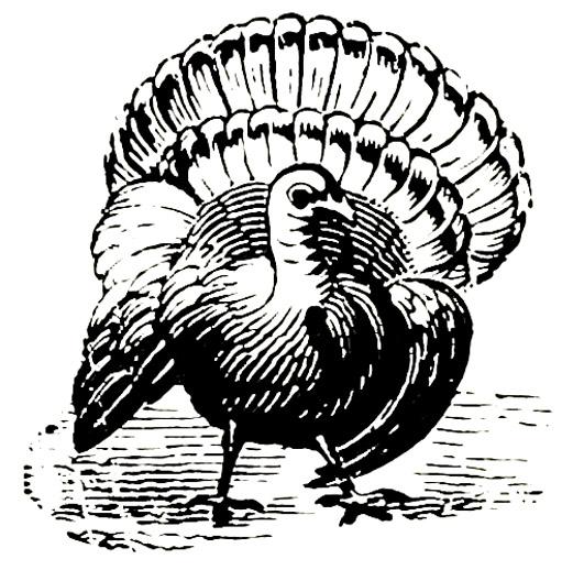 Victorian animal illustratino of turkey bird