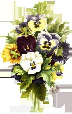 flower clipart pansies
