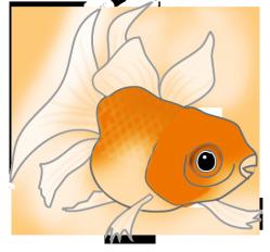 orange cat fish