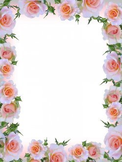 flower frame with pink roses