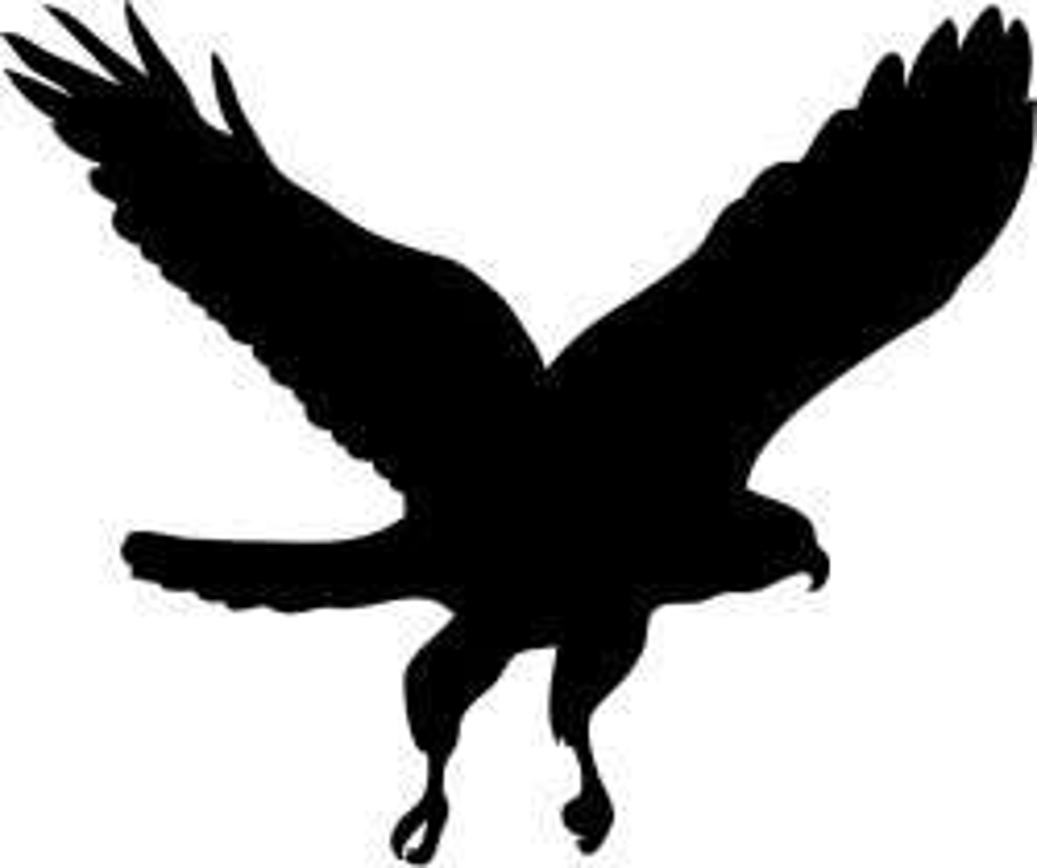 Hunting hawk silhouette
