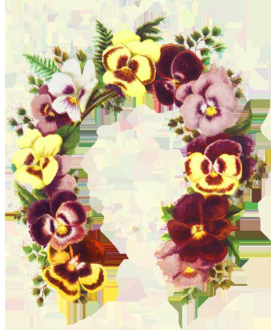 flowers shaped as a horse shoe