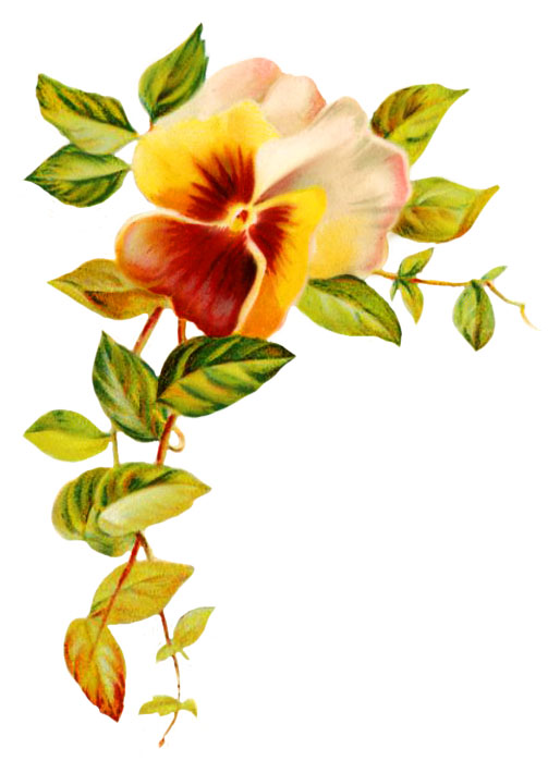 wedding clipart pansy and leaves
