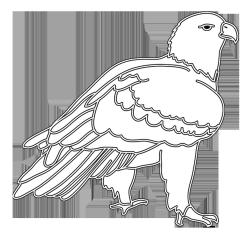 white outline eagle bird silhouette