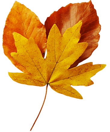 several fall leaves clipart