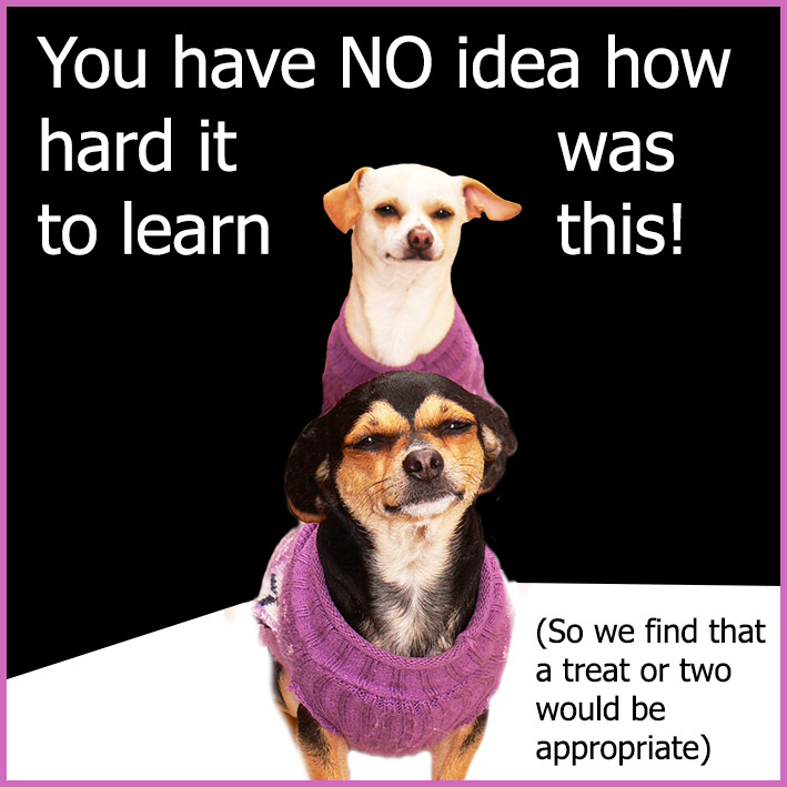 funny dog quote about tricks and treats