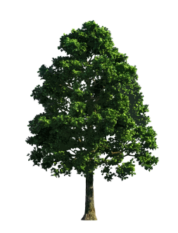 green leaved tree clipart